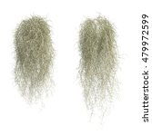 3d Rendering Of Spanish Moss