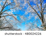 frozen trees in winter with... | Shutterstock . vector #480024226