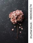 Dried Flowers Hydrangea On...