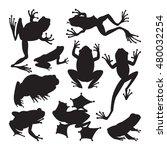 frog cartoon tropical animal...   Shutterstock .eps vector #480032254
