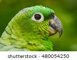 Small photo of Yellow-crowned Amazon, Amazona ochrocephala auropalliata, portrait of light green parrot, Costa Rica. Detail close-up portrait of bird. Green head parrot. Parrot from south America