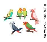 cartoon parrots set and parrots ... | Shutterstock .eps vector #480056128