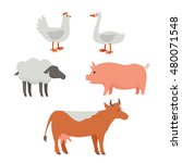 set of domestic animals... | Shutterstock . vector #480071548