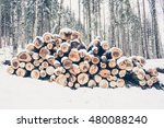 Pile Of Cut Woods On Snow In...