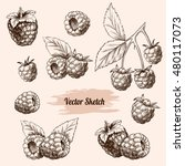 vector raspberries hand drawn... | Shutterstock .eps vector #480117073