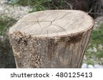 abstract of close up tree stump ... | Shutterstock . vector #480125413