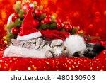 Stock photo sleeping christmas kitten 480130903