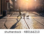 Stock photo the woman take a walk with dogs at sunset on brooklyn street new york city usa 480166213
