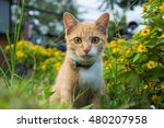 Stock photo cat in the garden 480207958
