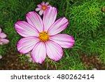 Pink Flower  Rhs Harlow Carr ...