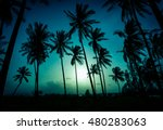 silhouette coconut palm trees... | Shutterstock . vector #480283063