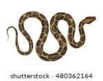 python vector illustration.... | Shutterstock .eps vector #480362164