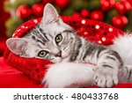 Stock photo cute christmas kitten 480433768