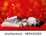 Stock photo sleeping christmas kitten 480434284