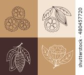 hand drawn cacao beans labels ... | Shutterstock .eps vector #480457720