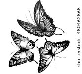 butterfly watercolor  isolated...   Shutterstock . vector #480462868
