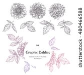 Hand Drawn Ink Dahlias....