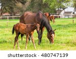 horses foals horses with new...