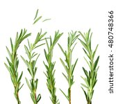 fresh rosemary isolated on a...   Shutterstock . vector #480748366