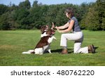 Stock photo dogs giving high five to woman 480762220