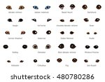Vector Set Of Cartoon Dog Eyes...