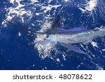 Beautiful White Marlin Real...