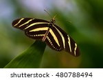 tropical butterfly on the leaf. ... | Shutterstock . vector #480788494