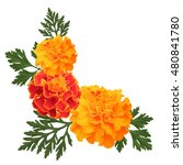 Stock vector decorative background with orange marigolds symbol of mexican holiday day of dead vector 480841780