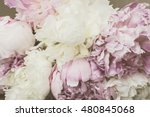 peony flower background.... | Shutterstock . vector #480845068
