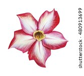 Red Tropical Flower Drawing ...