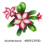 Exotic Pink Flower Drawing ...