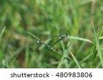 dragonfly | Shutterstock . vector #480983806