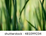 blurred background with... | Shutterstock . vector #481099234