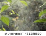 Small photo of Spiny spider Micrathena sp. in a web in the early morning. In montane rainforest on the Pacific slopes of the Andes in Ecuador.