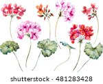 watercolor vector  flower... | Shutterstock .eps vector #481283428