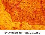 wood texture in cross section... | Shutterstock . vector #481286359