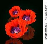 poppy   Shutterstock . vector #481385344
