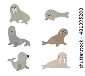 set of different walruses and...