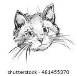 Stock vector cute cat sketch vector illustration vector pet kitten cute cat 481455370
