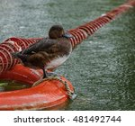 duck on a buoy | Shutterstock . vector #481492744