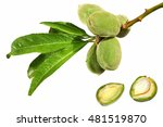 almonds. fruits and leaves on a ...   Shutterstock . vector #481519870