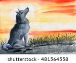 Grey Wolf Looking At The Sunse...