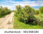 landscape in danube delta ... | Shutterstock . vector #481588180