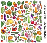 fruits and vegetables. colorful ... | Shutterstock .eps vector #481590544