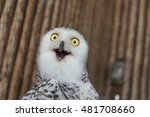 close up snowy owl eye with... | Shutterstock . vector #481708660