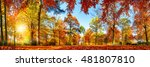 panorama of colorful trees in a ... | Shutterstock . vector #481807810