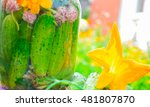 cucumbers with herbs and spices ... | Shutterstock . vector #481807870