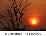 Silhouette Dry Tree With Sunse...