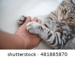 Stock photo cats love by the hand grip at hand 481885870