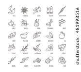 spices and seasonings vector... | Shutterstock .eps vector #481993516
